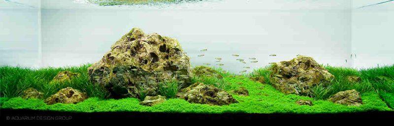 Iwagumi Aquarium