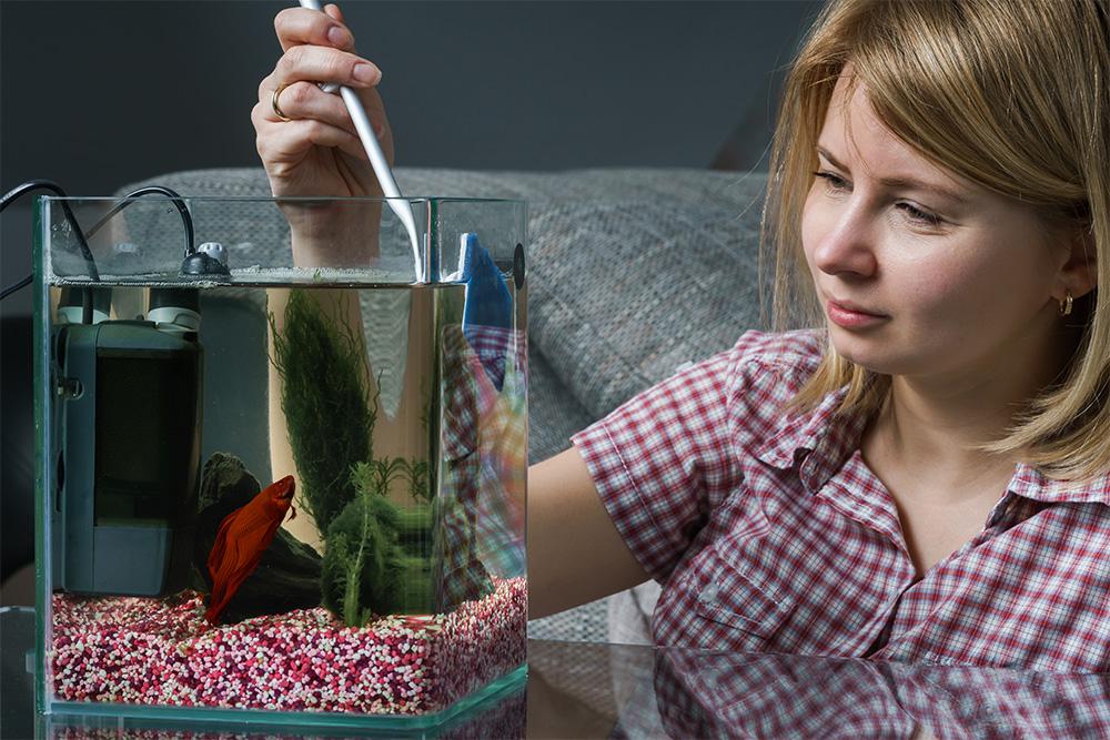 Aquarium Blog Post