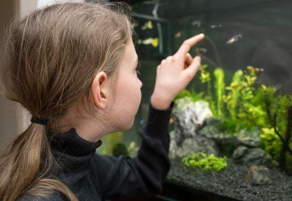 Aquarium Brings Joy
