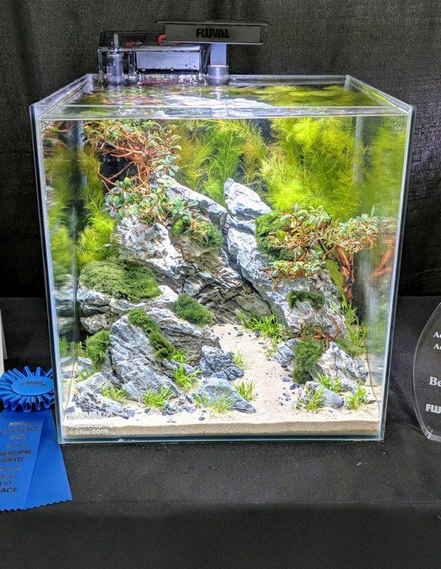 Aquarium Information Sevenports Nano Aquariums