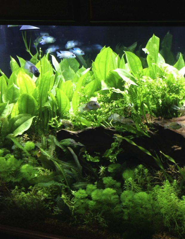 Aquarium Information