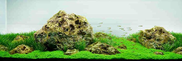 Iwagumi Aquarium Aquascaping