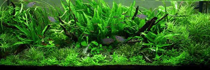 Jungle Aquarium