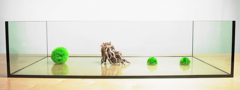 Planted Aquarium Choices