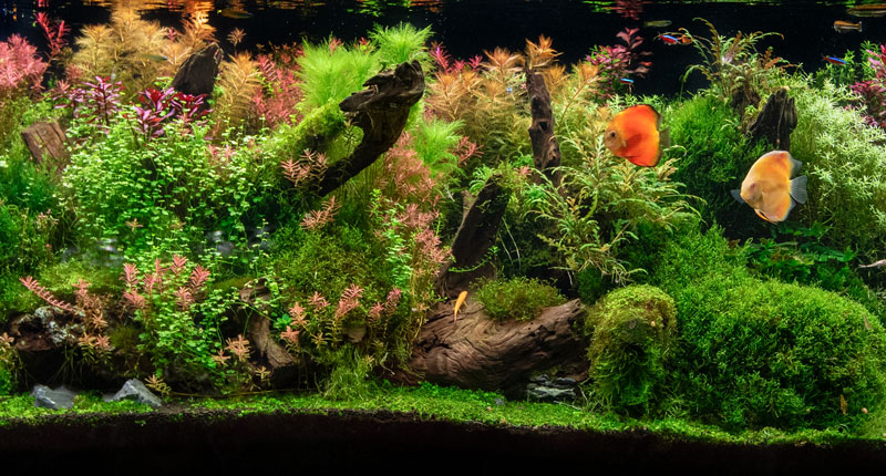 Planted Aquariums for Beginners