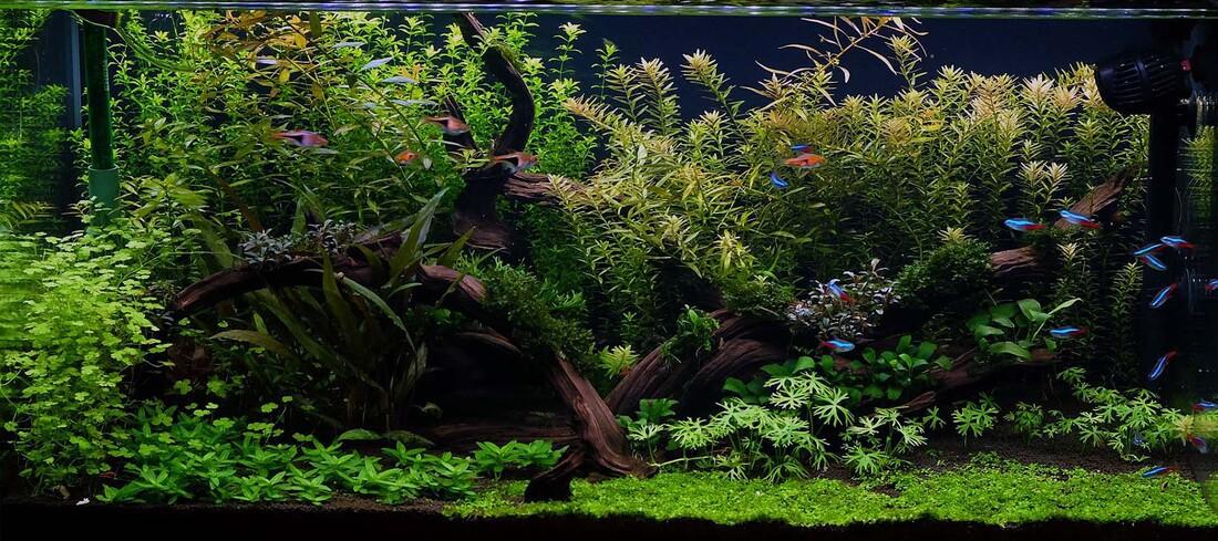 Aquascaping Tanks Aquariums Supplies Rocks Ideas Sevenports